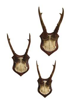 Roe Deer Trophy - Set of Three